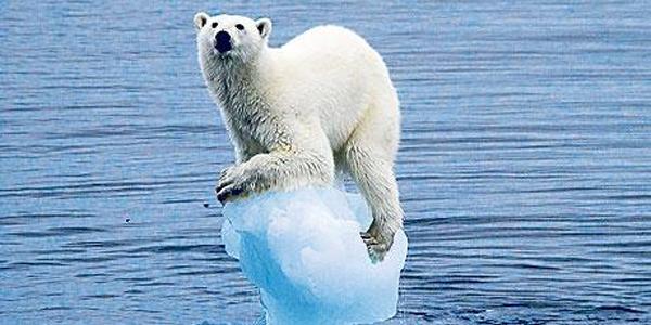 polar bears international climate change