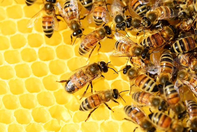 Tiffany Finck-Haynes on Bee Collapse, Michelle Chen on Nail Salon Workers