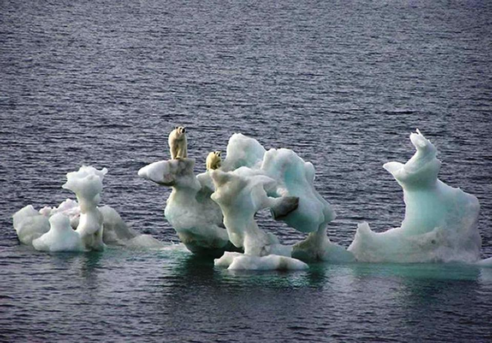 Polar bears on melting iceberg
