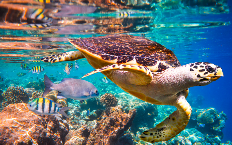Sea turtle image from IPBES report