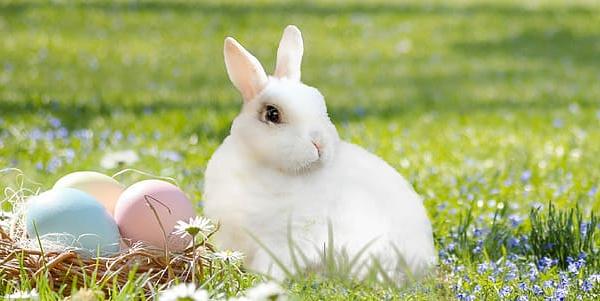 US Media Downplay Overseas Coronavirus Lessons to Focus on Easter Bunny
