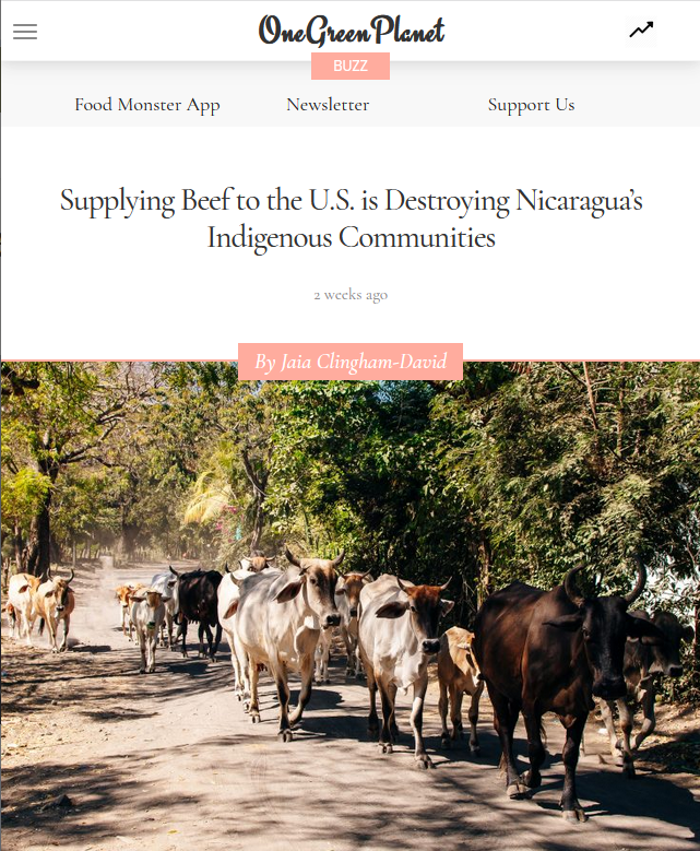 One Green Planet: Supplying Beef to the U.S. is Destroying Nicaragua's Indigenous Communities